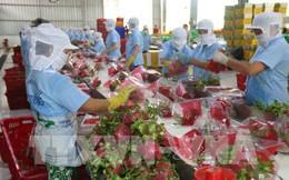 Xuất khẩu rau quả ước đạt 321 triệu USD