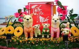Đường phố Đà Nẵng lung linh sắc hoa chào năm mới