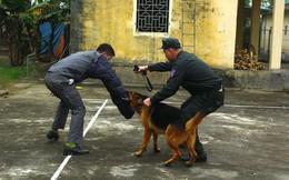 Chuyện chó nghiệp vụ đi thi tốt nghiệp và chiến công bắt tội phạm nguy hiểm