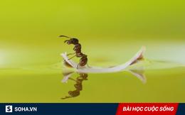 2 con kiến không may rơi vào cốc và diễn biến sau đó khiến nhiều người phải suy ngẫm!