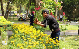 Đập nát hoa để không bị ép giá