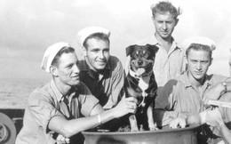 Sinbad – Đệ nhất khuyển dũng cảm của hải quân Mỹ thời Thế chiến 2
