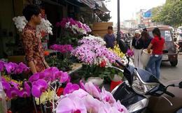 Người Việt chi 18 triệu USD mua hoa ngoại ngắm Tết