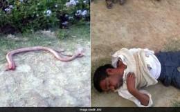 Bị rắn cắn, người đàn ông trả thù bằng cách nhai đầu rắn rồi nhận kết cục đau đớn