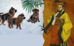 """Phát hiện """"Án tìm chó"""" trong mộ cổ và sở thích ít người biết của Tần Thủy Hoàng, Hán Vũ Đế"""