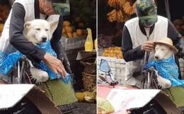 Kệ mưa ướt, cụ ông vẫn cho cún cưng đội mũ trước: Nhìn thương quá đi mất!