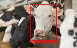Xuất hiện công nghệ nhận diện gia súc, vượt mặt cả Face ID của iPhone X