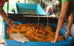 Chi tiền triệu mua 180 kg cá, lươn phóng sinh ngày ông Công ông Táo ở Sài Gòn