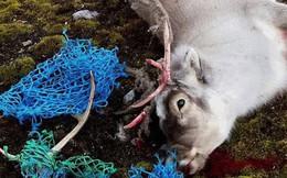 Nhìn những loài vật chết thảm thương vì rác thải của con người, ai cũng nghẹn ngào và quan ngại về ô nhiễm môi trường