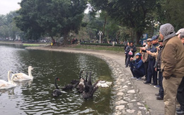"""PGS Hà Đình Đức: """"Họ bảo tôi không làm gì cho Hồ Gươm, khiến rùa chết còn bảo thủ"""""""