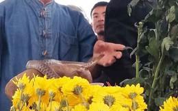Hai con rắn xuất hiện trên ngôi mộ vô danh, hàng nghìn dân tập trung cúng bái