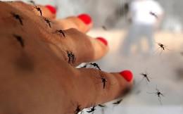 Đây là lý do tại sao bạn bị muỗi đốt nhiều hơn người khác