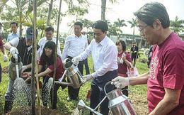 Hà Nội trồng thêm 500 cây hoa anh đào Nhật Bản
