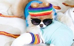 Chú mèo 'Chó' ở Hải Phòng nổi tiếng cũng chưa bằng con chó có 16 triệu theo dõi này