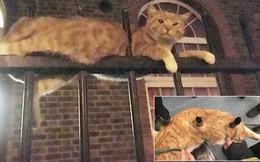 """Bị 3 ống thép đâm qua người, chú mèo """"9 mạng"""" vẫn sống sót đầy kỳ tích, bình tĩnh chờ đội cứu hộ"""