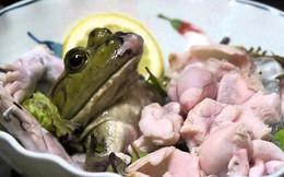 Người phụ nữ ăn ếch sống mong khỏi bệnh, không ngờ rước họa vào thân