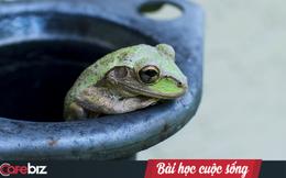 Câu chuyện con ếch bị điếc: Đừng vì miệng thế gian mà buông bỏ những nỗ lực mình đang thực hiện