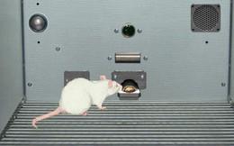 """Thử nghiệm thuốc trên """"chuột ảo"""" sẽ cứu sống được 60.000 động vật thí nghiệm mỗi năm"""