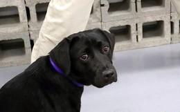 Sập nhà khiến 4 người tử vong, chú chó trung thành quyết không rời khỏi đống đổ nát