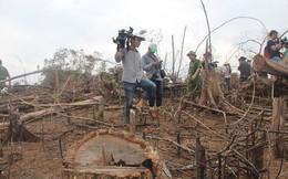 Kỷ luật hàng loạt cán bộ kiểm lâm do để xảy ra phá rừng phòng hộ