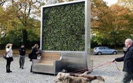 """Bạn có tin: Chiếc """"ghế"""" này lọc không khí còn sạch hơn cả một khu rừng cỡ nhỏ?"""