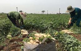 Chủ tịch Hà Nội: Sớm xây chợ đầu mối 'giải cứu' nông sản