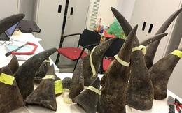 Đề xuất tăng nặng hình phạt đối với 'trùm' buôn lậu sừng tê giác