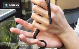 Sự thật về loài rắn sở hữu râu hình ghi đông xe đạp và biết đẻ con