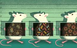"""Tình cờ tạo ra cả một """"thành phố chuột"""", chuyên gia cảnh báo về thực trạng các phòng thí nghiệm tại Anh"""