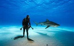 """Người phóng viên dũng cảm đến điên rồ: """"Tôi đã mơ thấy cá mập bơi qua bồn cầu…"""""""