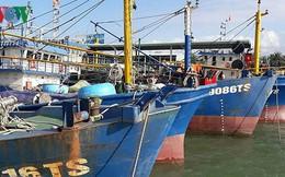 Tàu vỏ thép 67 nằm bờ: Xem xét khởi kiện doanh nghiệp đóng tàu