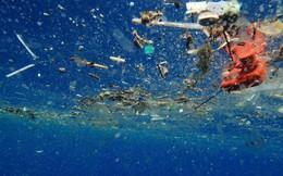 Sinh vật biển đang ăn hàng tấn nhựa mỗi ngày, thì ra đây là lý do tại sao