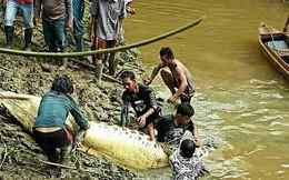 Mổ bụng cá sấu, tá hỏa phát hiện chân tay người