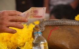 """TIN TỐT LÀNH 5/3: Niềm vui của con rắn lỡ làm thần và nhiều quan bị """"vinh danh"""""""