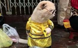 Chú mèo tên Chó đeo kính râm ở chợ Hải Phòng gây sốt trang tin nước ngoài