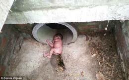 Bé sơ sinh còn nguyên dây rốn sống sót thần kỳ khi bị bỏ rơi trong ống cống