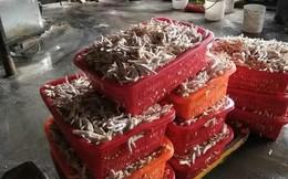 Tin không vui với các tín đồ ẩm thực: TQ phát hiện xưởng chế biến 2 tấn chân gà siêu bẩn, chứa chất phụ gia cấm