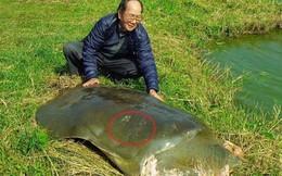"""PGS Hà Đình Đức: Chưa thể khẳng định rùa ở hồ Xuân Khanh là """"hậu bối"""" của rùa Hồ Gươm"""