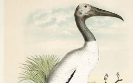 """Ở thời Ai Cập cổ đại, có """"gan cùng trời"""" giết loài chim này, án tử sẽ chờ bạn"""