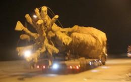 """Chủ xe chở """"cây khủng"""" bác tin cây liên quan đến tướng CSGT"""