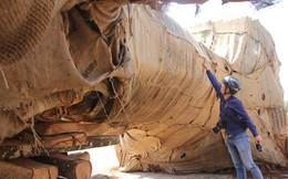 Hé lộ nguồn gốc 1 trong 3 cây khổng lồ bị bắt ở Thừa Thiên - Huế