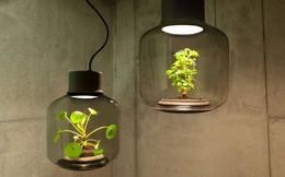 15 kiểu chậu cây tạo nên vẻ đẹp cuốn hút cho không gian sống của bạn
