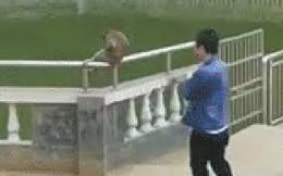 Du khách Trung Quốc cố ý đẩy con khỉ xuống ao để chọc cười và nhận lại cái kết đầy cay đắng