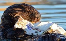 Báo động thật rồi: Ô nhiễm rác nhựa ngày càng gây nguy hiểm cho cuộc sống chúng ta