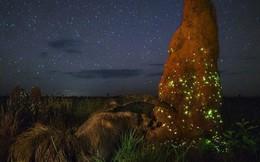 Đây là tấm hình suýt đạt giải nhất cuộc thi ảnh thiên nhiên, nếu như không bị lộ ra điều này