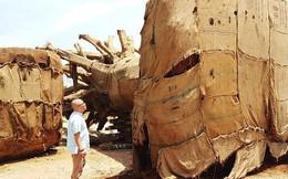 Xuất hiện thêm người mang hồ sơ về cây 'kỳ quái' trình kiểm lâm