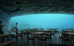 Bạn nghĩ sao nếu được xuống tận đáy biển để ăn nhậu? Hãy đến nhà hàng này ngay và luôn