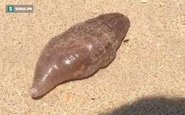 """Phát hiện sinh vật lạ như từ """"ngoài hành tinh"""" trôi dạt vào bờ biển Thái Lan"""