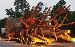 """Ba cây khủng """"tàng hình"""" qua Đà Nẵng trước khi bị bắt giữ tại Huế"""
