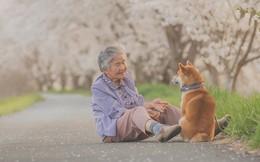 Giữ lời hứa chụp bà và chú chó dưới tầng hoa anh đào, câu chuyện của nhiếp ảnh gia Nhật Bản khiến bao người thổn thức